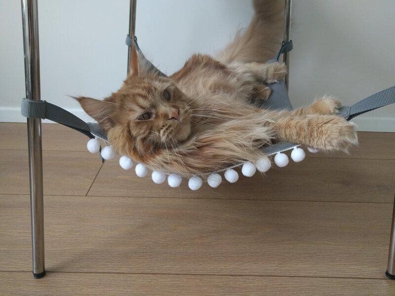 Katės hamakas su burbulais (juoda/pilka) kaina ir informacija | Guoliai, pagalvėlės | pigu.lt