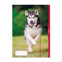 Aplankas Herlitz Šuniukas, su guma, laminuotu viršeliu, A3, 10285708 kaina ir informacija | Kanceliarinės prekės | pigu.lt
