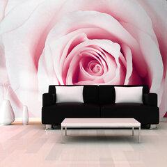 Fototapetas - Rose maze kaina ir informacija | Fototapetai | pigu.lt