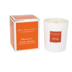 Kvapioji žvakė Max Benjamin Mimosa & Sweet Amber 190g