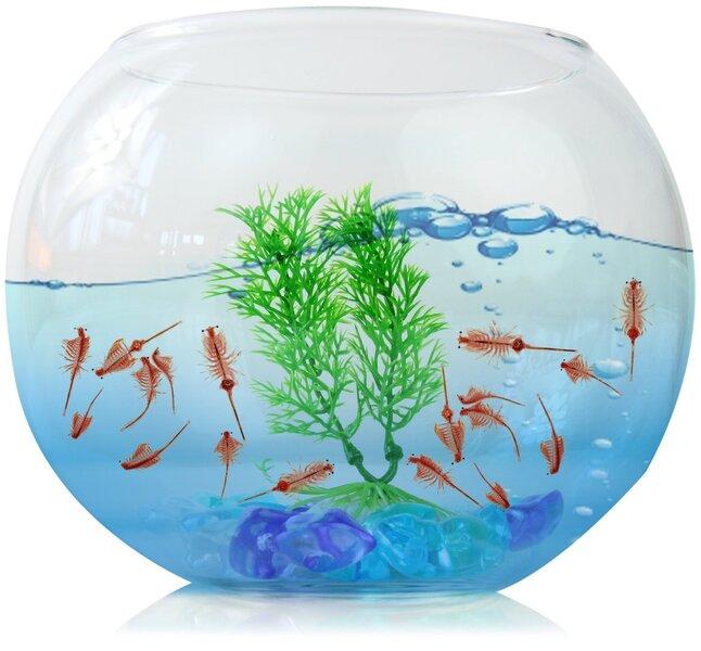 Akvariumas 18x18x15 cm kaina ir informacija | Akvariumai ir jų įranga | pigu.lt