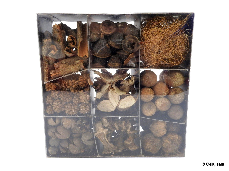 Džiovintų augalų rinkinys dėžutėje